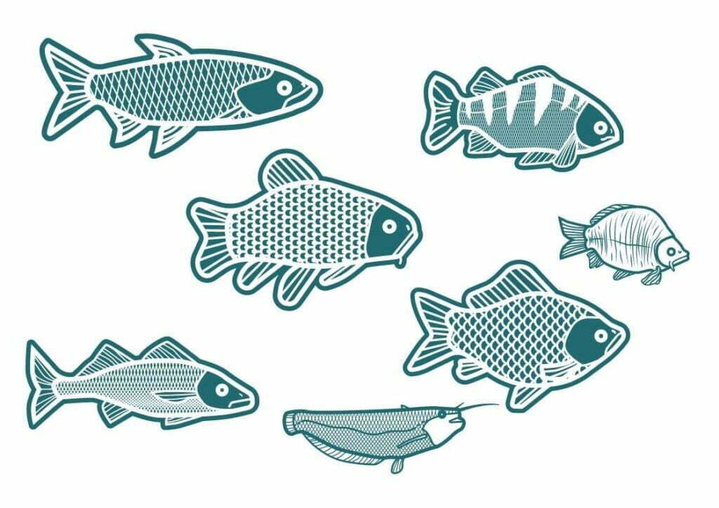 dessin nageoire de poissons
